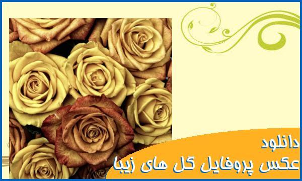 دانلود عکس های پروفایل گل های زیبا برای اکانت های شبکه های اجتماعی