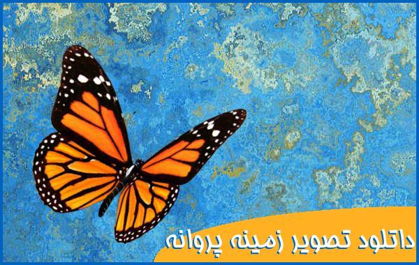 داتلود تصویر زمینه پروانه با کیفیت
