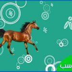 دانلود +20 عکس اسب
