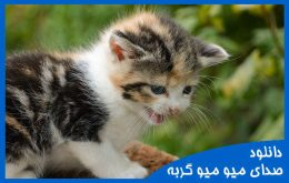 صدای میو میو گربه