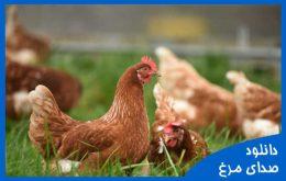 دانلود صدای مرغ