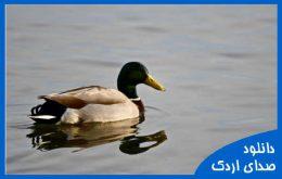 دانلود صدای اردک
