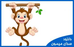 دانلود صدای میمون
