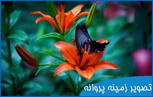 تصویر زمینه پروانه