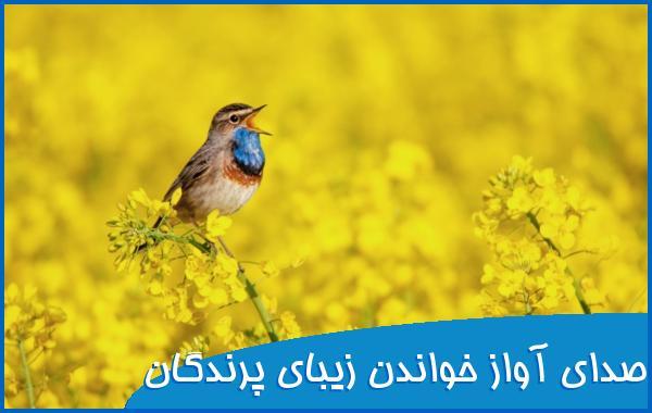 صدای آواز خواندن زیبای پرندگان