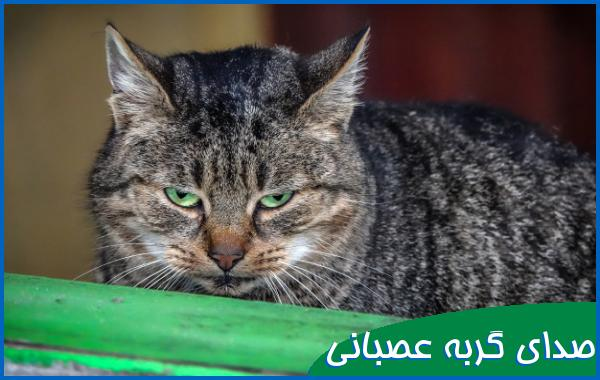 صدای گربه عصبانی و وحشی
