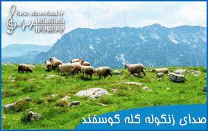 صدای گله گوسفند {زنگوله و بع بع}